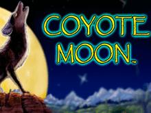 Лунный Койот